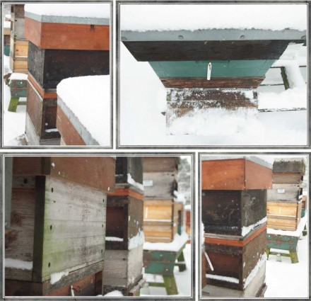 In Sight: Snowy Bee Hives