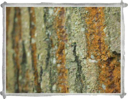 In Sight: Orange Lichen